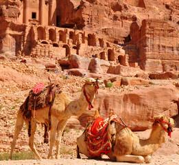 zwei Kamele vor der beeindruckenden Kulisse von Petra