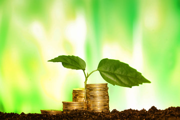 Green seedling growing from coins in the soil. The concept of mo