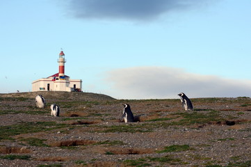 The lighthouse on the island of Magdalena.Magellanic Penguins  at the penguin sanctuary on Magdalena Island in the Strait of Magellan near Punta Arenas.