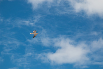 Flying seagull and a sky