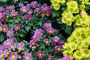 group of pink and yellow flower background