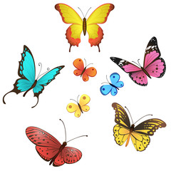 Vector butterfly set on white background