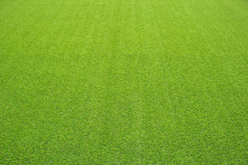 artificial grass, perspective