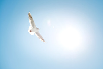 White seagull on a blue sky