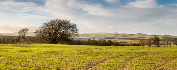 Canvas Prints Hill Panoramic of The Cheviot and its hills
