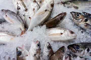 raw fish background.  Fresh fish on ice