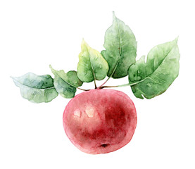 Single red watercolor apple