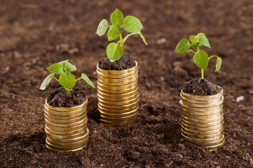 Golden coins in soil with young plant.