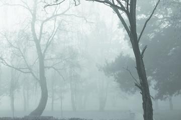 Printed roller blinds Art Studio Poranna mgła w parku2