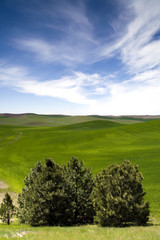 Farmland Iconic Scene Clouds Green Hills Blue Sky