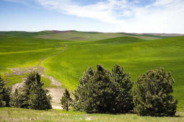 Food Growing Under Blue Sky Farm Field Palouse Country