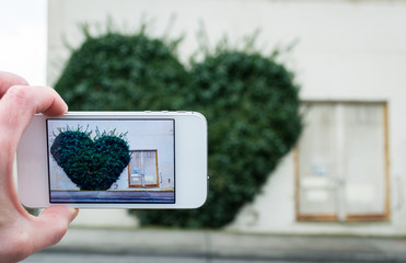Person taking a photo of an ivy heart on a building with a cell phone.