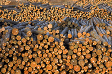 Lumber Mill Log Pile Wood Ready for Processing