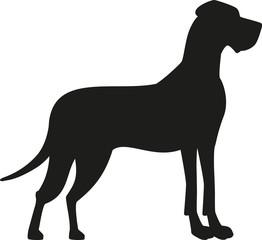 Obraz Great dane black silhouette - fototapety do salonu