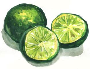 lime citrus fruit, watercolor painting
