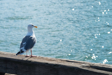 A seagull and water glitter background