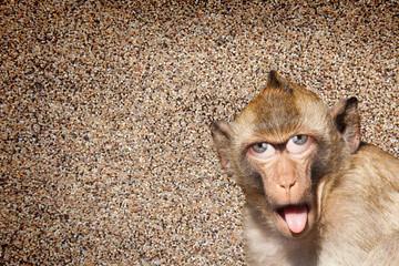 Rhesus-Affe mit herausgestreckter Zunge  , mit menschlichen Augen und graue Wand im Hintergrund - Photoshop Compositing