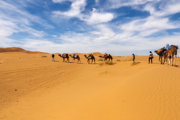camels going through the desert