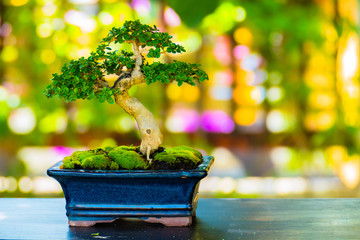 Poster Bonsai Close up shot bonsai on bokeh background