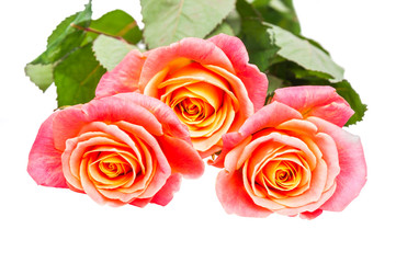 Three red-orange rose isolated on white background