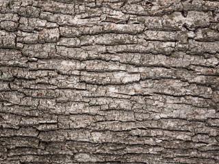bark tree texture Fototapete
