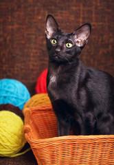 Black Oriental Shorthair Cat Sitting In Wooden Basket