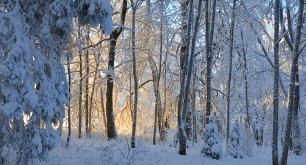 Snow and rime covered forest with orange sunset illumination in background