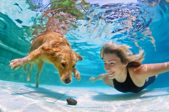 Smiley woman playing with fun and training golden retriever puppy in swimming pool - jump and dive underwater to retrieve stone. Active games with family pets and popular dog breeds like a companion.
