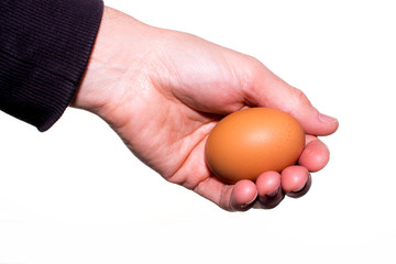 hand holds a chicken egg