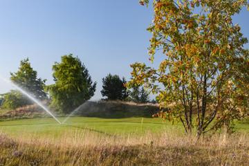 Rasen Bewässerung Sommer