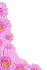 Gerbera Flowers Isolated, Floral Border
