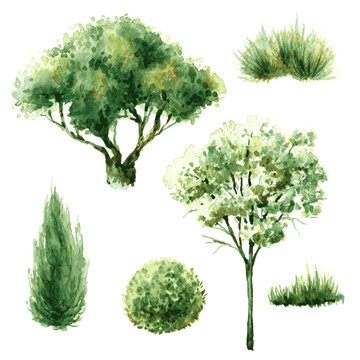 Set of green trees and bushes.