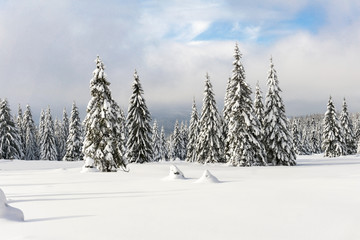 Winter mountains landscape.Trees covered with fresh snow, cloudy