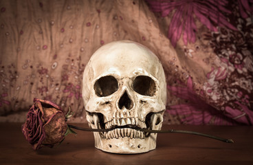 Still life white human skull with dry red rose in teeth on woode