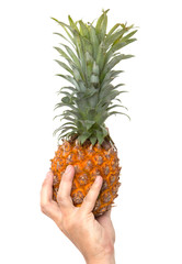 fresh pineapple in his hand on a white background