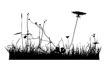 Real plant traced silhouettes, weeds - vector illustration