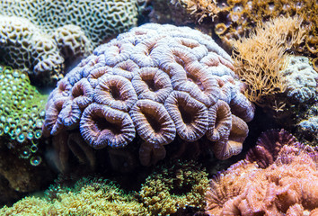 Tropical corals in large saltwater aquarium
