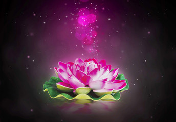 Dreamy lotus flower