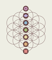 Chakra icons on flower of life modern design