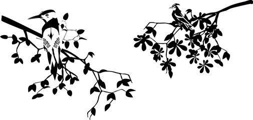 Birds on branches silhouettes isolated on white vector illustration