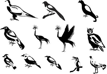 Black white colored birds vector set illustration.