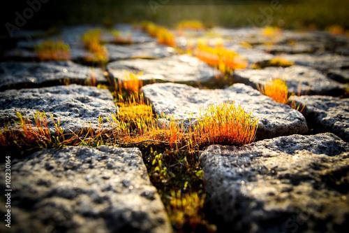 moss on a granite path photo libre de droits sur la banque d 39 images image 102230164. Black Bedroom Furniture Sets. Home Design Ideas