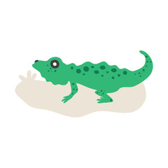 Green Iguana isolated