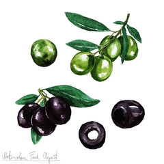 Watercolor Food Clipart - Olive