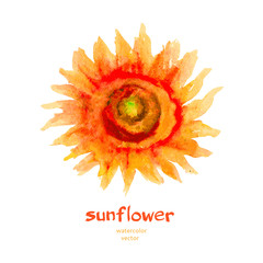 Sunflower watercolor isolated on a white background.Vector, hand drawn illustration