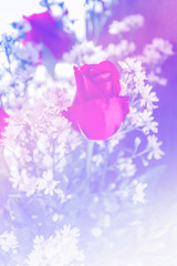 Abstract sweet fantasy flower with colourful filters in soft foc
