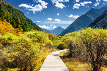 Boardwalk across autumn forest among mountains on sunny day