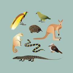 Vector Set Of Different Australian Animals. Animals of Australian Kangaroo Echidna, Couscous, Australian giant lizard, mangrove snake, parrot Kea, Laughing Kingfisher, Big bird of paradise.