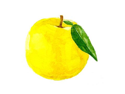 Japanese-style citron illustrations