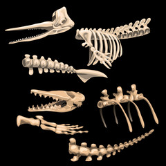 Bones and fragments skeletons of ancient fish